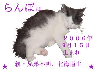 紹介らんぼ