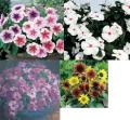 花の種写真