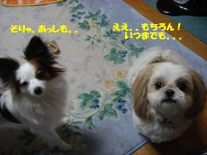 DSC04783-・祇convert_20080215204804