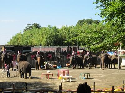 ゾウのショー