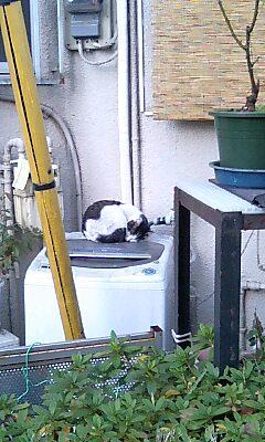 猫(洗濯機の上)