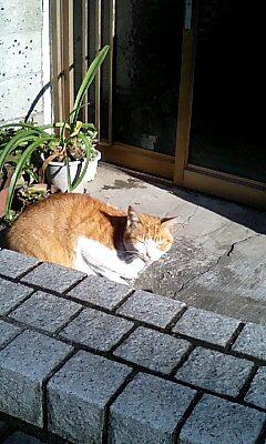 猫(日向ぼっこ)