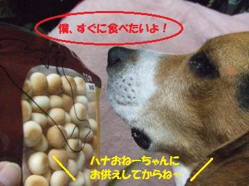004_convert_20110410054309.jpg