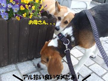008_convert_20110503023057.jpg