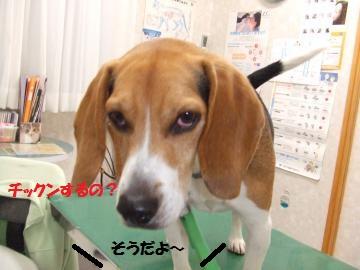 016_convert_20110331225450.jpg