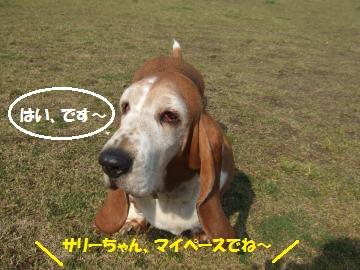 036_convert_20110428052502.jpg