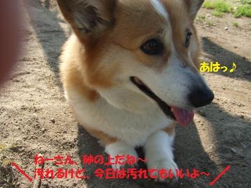 040_convert_20110428052726.jpg