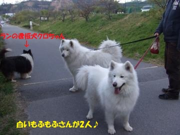 055_convert_20110428053136.jpg