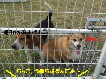 102_convert_20110505035627.jpg