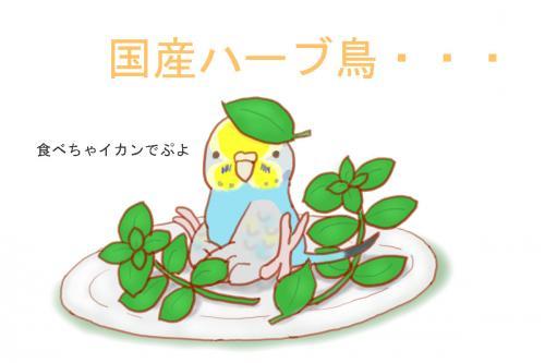 ハーブ鳥1