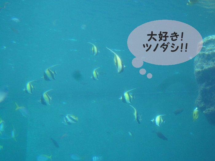 大好き ツノダシ! かっこいい!!