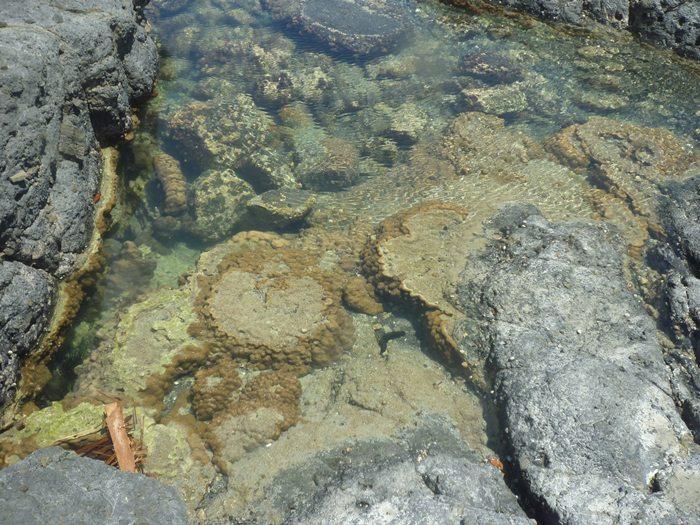 小さな タイドプールだけど サンゴたくさん♪
