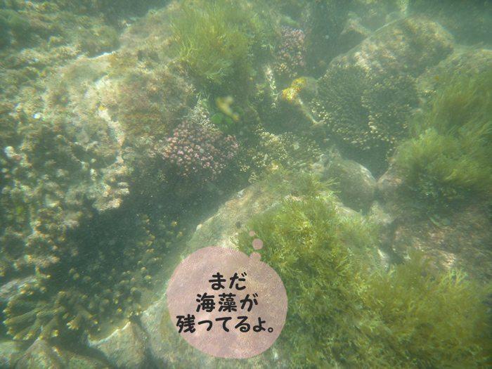まだ 海藻が残ってたねぇ~。