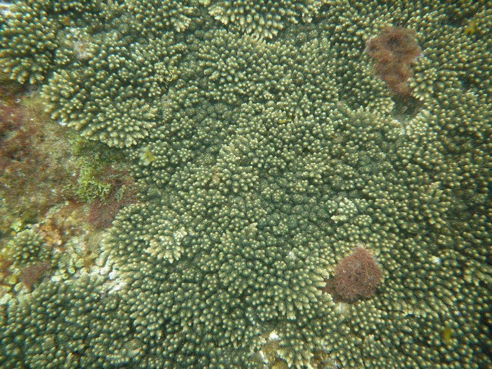 潮が引いてて ここは真下が ミドリイシ。