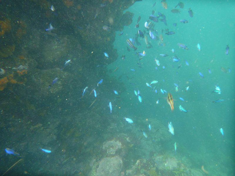 たくさんの魚たち!!!