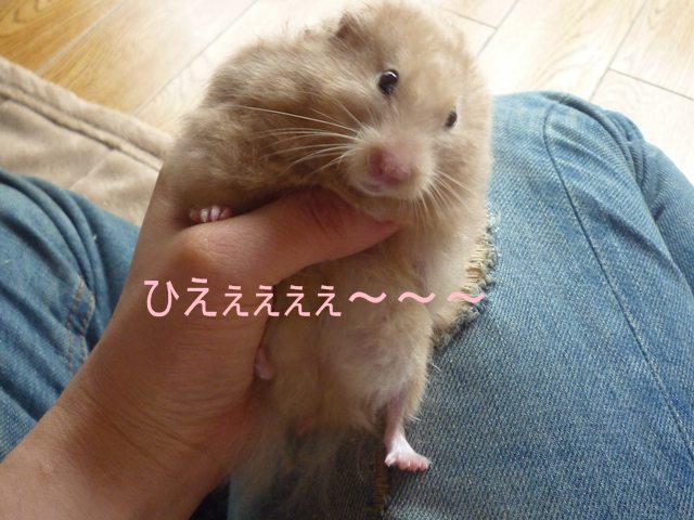 びびりぃ 銀ちゃん♪
