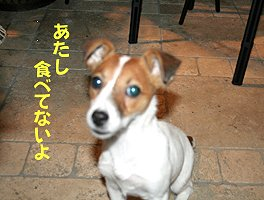 IMG_7874.jpg