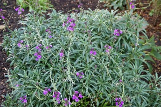 1月14日の庭、08年-02 A