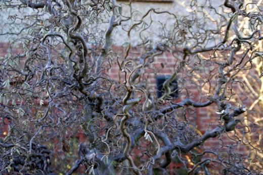 1月14日の庭、08年-10 A