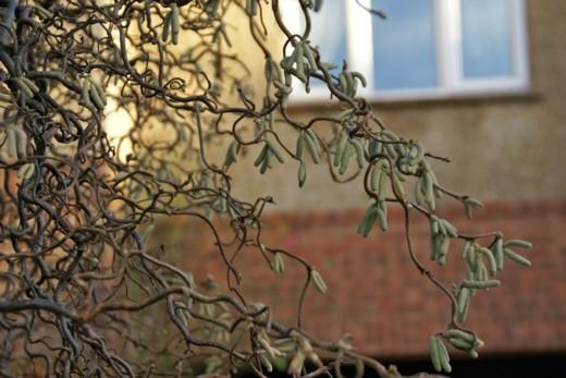1月14日の庭、08年-18 A