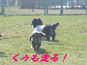 くぅも走る!