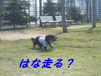 はな走る?