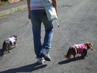 ちょことくうも歩こう!