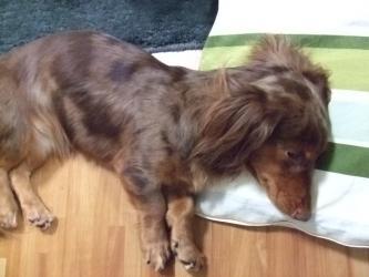 枕使ってるし・・・