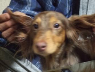 飛行犬ココア、