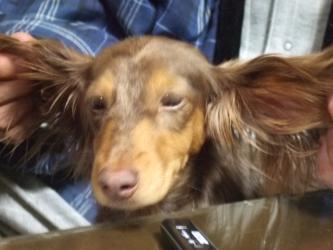 飛行犬ココア