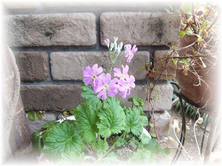 2012-03-01 庭の花 002