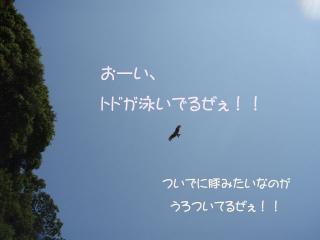 P5040901.jp.jpg