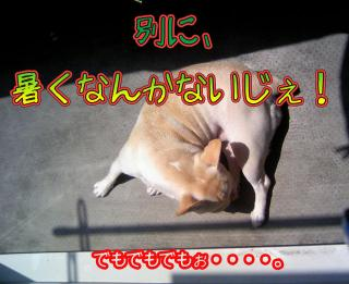 TS380336.jpg