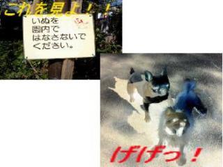 img20061109_1_p.jpg