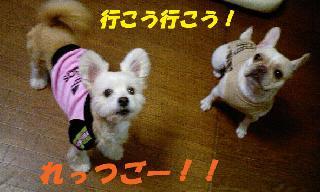 img20061112_p.jpg