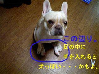 img20061120_1_p.jpg