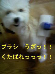 img20061129_1_p.jpg