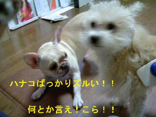 img20061129_2_p.jpg