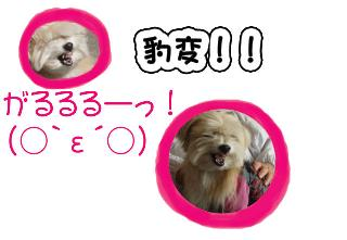 img20070304_1_p.jpg