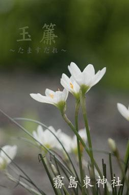 霧島東神社の玉簾