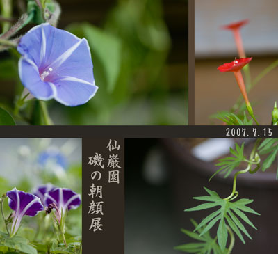 070715仙巌園朝顔展