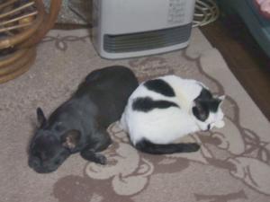 ヒーター犬&ヒーター猫