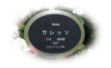 gazo0601001