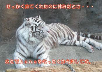 oyasumi_gazo_005