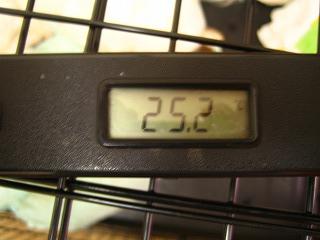 2011.8.12 034犬部屋温度
