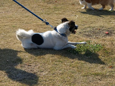 日の丸犬ジョン君☆