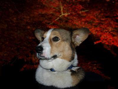 夜の紅葉もなかなかに風流だぜ☆