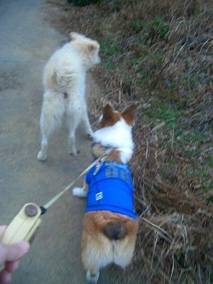 一緒にお散歩だぜ♪