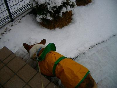 う~寒い~ それに肉球が冷たいんですけど...(?)