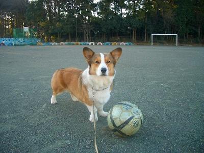 クールなサッカー見せてやるぜ☆